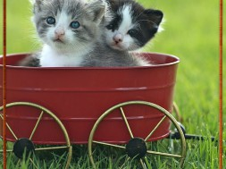 What's better than one kitten to brighten your day? Two kittens!