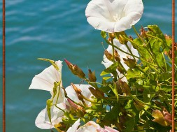 Flowers that grow by the water are always beautiful. Don't you agree?