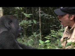 Surprising and Touching Gorilla Reunion